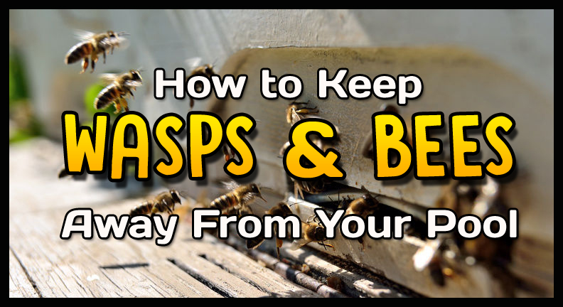 How to Keep Wasps and Bees away from Swimming Pool